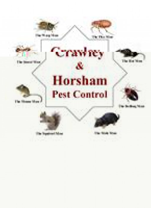 Crawley & Horsham Pest Control