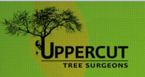 Uppercut Tree Services